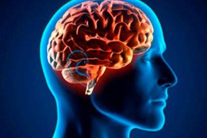 ¿Sabes cómo escapa el cáncer cerebral del sistema inmune?
