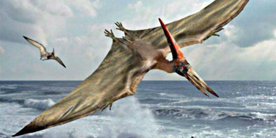 Los pterosaurios, reptiles voladores gigantes, se extinguieron en su mejor momento