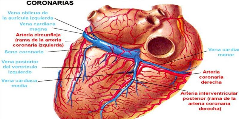 Realizan por primera vez reducción del seno coronario