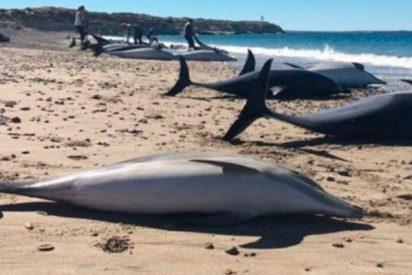 Todavía se desconocen las causas de la muerte de estos 49 delfines en las costas de Argentina