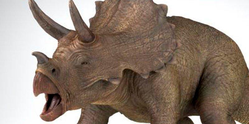 ¿Sabías que los dinosaurios cornudos eran los más amorosos?
