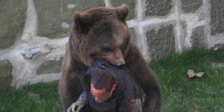 El cazador cazado: cuando la presa se convierte en depredador