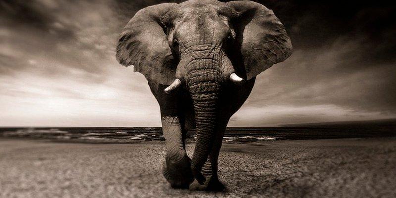 ¿Sabes por qué los elefantes no padecen cáncer?