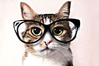 Los gatos no saben matématicas