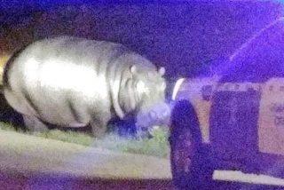 El extremeño que se ha encontrado a un hipopótamo paseando por su pueblo