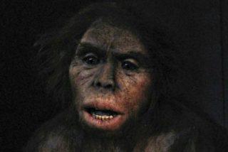 Arqueólogos descubren que el Homo antecessor tuvo hombros parecidos a los humanos