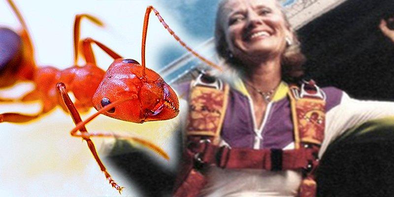 ¿Sabes cómo 250.000 hormigas salvaron la vida a esta paracaidista?