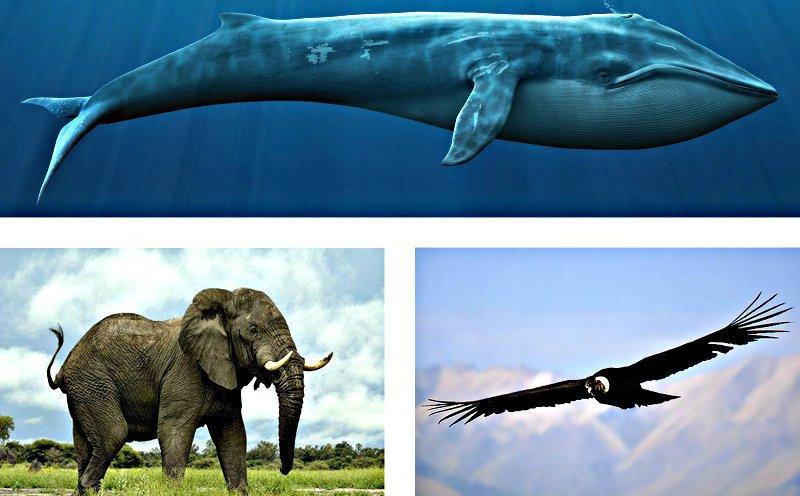 Los mamíferos crecen más y se hacen más grandes en el agua la tierra