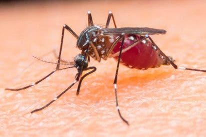 La bebé ingresada en el Hospital de Móstoles tras contagiarse de malaria recibe el alta