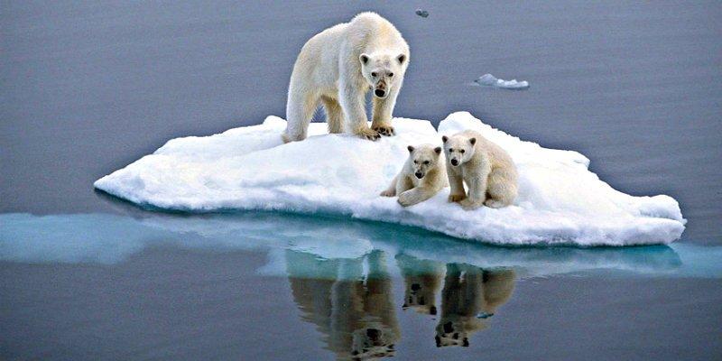 """Mientras Europa está azotada por """"la Bestia del Este"""", en el Ártico el calor """"es extremo"""""""