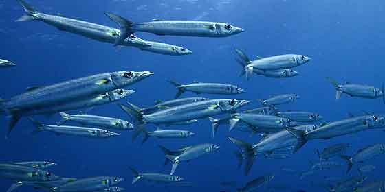 'Science': La pesca en el Atlántico Norte caerá un 60 por ciento a largo plazo