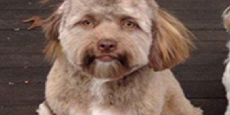 Este inquietante perro con cara de humano lo peta en las redes