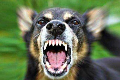 El perro feroz que muerde uno tras otro a 20 chinos
