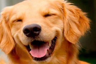 ¿Sabías que puedes clonar a tu perro por 40.000 euros?
