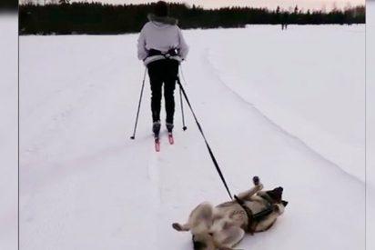El perro menos motivado del mundo causa furor en las redes