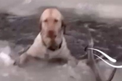 Los aullidos de este perro atrapado en el hielo te encogerán el alma