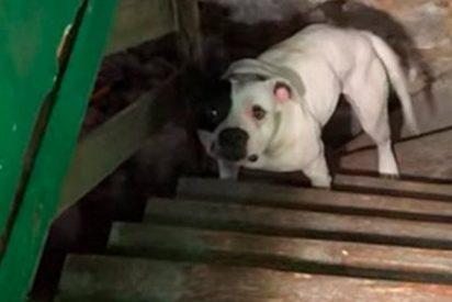 La reacción de este perro tras hallarlo encadenado en el sótano de una casa se hace viral