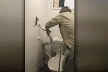 ¡La peor pesadilla!: Un joven es atacado por una pitón mientras estaba sentado en el váter
