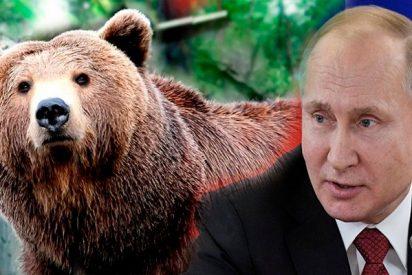 El inquietante encuentro de Vladímir Putin con un oso