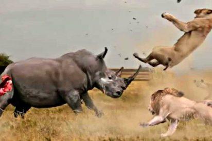 Los ataques animales más salvajes
