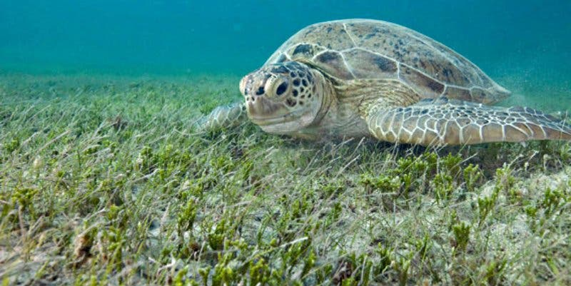 Cambio climático: Grandes depósitos de CO2 pueden liberarse en las praderas marinas