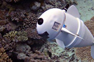 'SoFi': el pez robot de silicona que 'investiga' a otros peces confundido entre la fauna marina