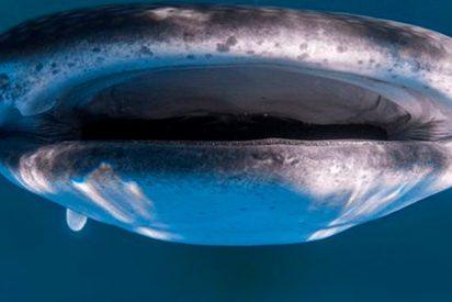 La imagen única de un tiburón gigante captada por este fotógrafo ha dado la vuelta al mundo