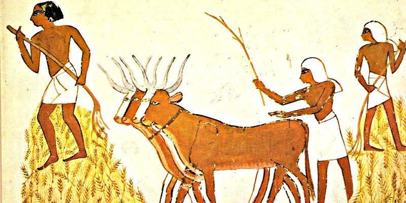 Seres humanos: La agricultura intensiva y las jerarquías sociales evolucionaron a la vez
