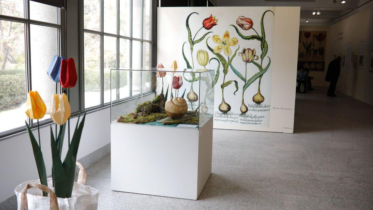 Tulipa tulipae. El tulipán ilustrado