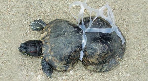 La ESA mide desde el espacio la devastadora 'plaga' de los desechos plásticos marinos