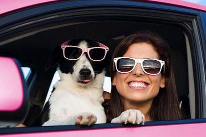 Estos son los mejores lugares para irte de vacaciones con tu perro
