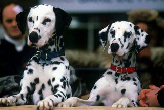 De Obélix a Tintín, ¿cuanto pagarían los dueños de los perros más famosos por sus seguros?