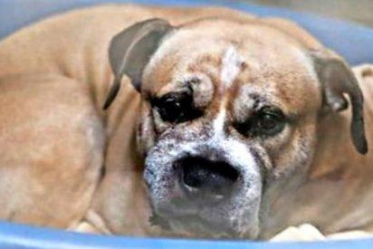 Un 'jurado popular' absuelve al perro asesino que mató a su dueña y al hijo de esta
