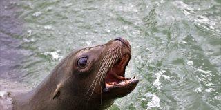 Este lobo marino varado en tierra enternece a las redes