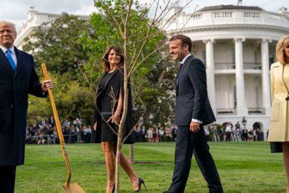Desaparece el árbol plantado por Trump y Macron en el patio de la Casa Blanca