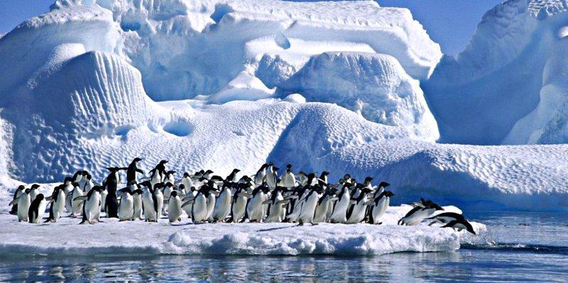 El nuevo 'ingrediente' de la dieta de los pingüinos de la Antártida: microplásticos