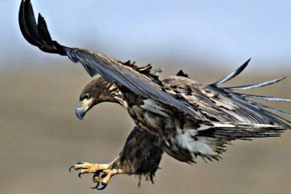 Los 7 ataques de águila más fulminantes que puedes imaginar