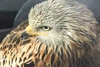 El cambio climático trastoca la cría de aves por falta de alimento