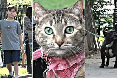 Dejan solos en un parque a un niño, una niña , un perro y un gato, ¿a quién ayuda la gente antes?