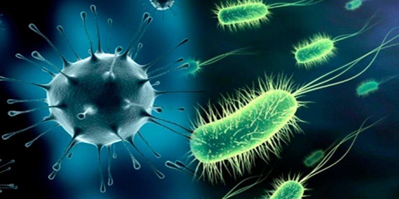 Así se comunican las bacterias en grupos para evitar los antibióticos