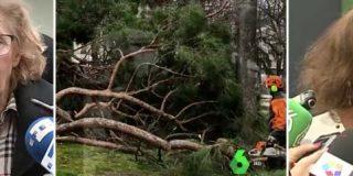 Las mentiras de laSexta para salvar la cara de Carmena y lo que decía cuando los árboles caían con Ana Botella