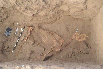 Restos de un caballo enterrado con sudario hace 3.000 años en el Nilo
