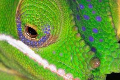 Así es el nuevo material sintético que se endurece y cambia de color inspirado en los camaleones