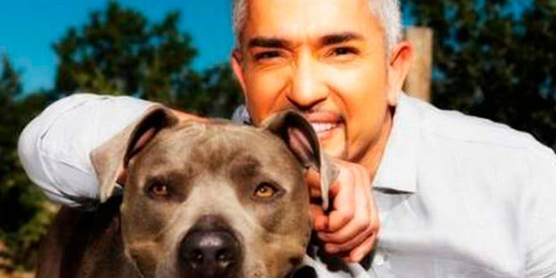 Las mascotas de 'El encantador de perros' impiden que le roben en casa