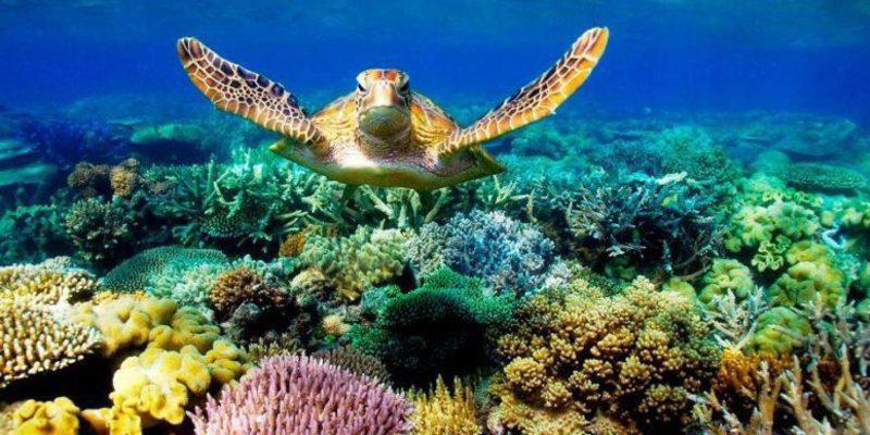 Clima: Una ola de calor diezmó buena parte de la Gran Barrera de Coral en 2016