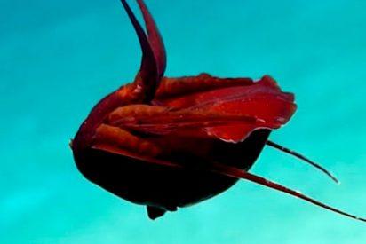 """Descubren esta """"extraña"""" criatura en el golfo de México"""