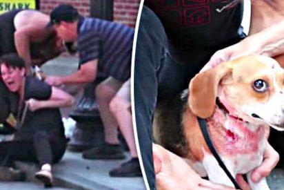 La mujer se juega la vida para salvar a su perrillo del ataque de un feroz pitbull