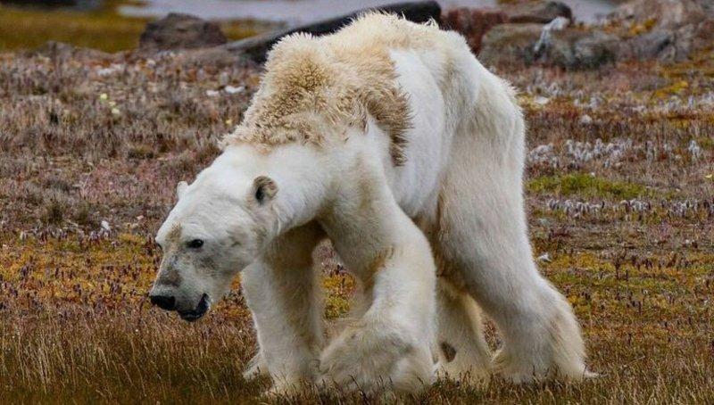 Calentamiento Global: El deshielo del Artico ruso se duplica a medida que sube la temperatura