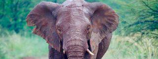 Peligro de extinción: La imagen mediática de los animales engaña sobre su supervivencia