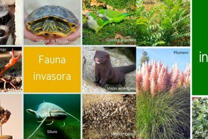 Así son las especies invasoras en España